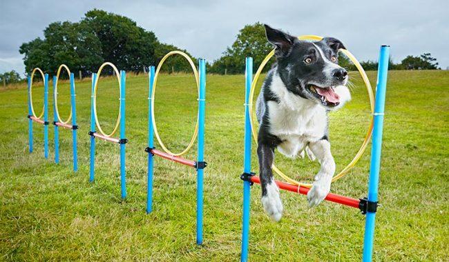 köpeklere bahçe oyunları