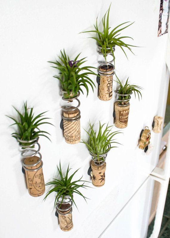 tillandsia bitkisi