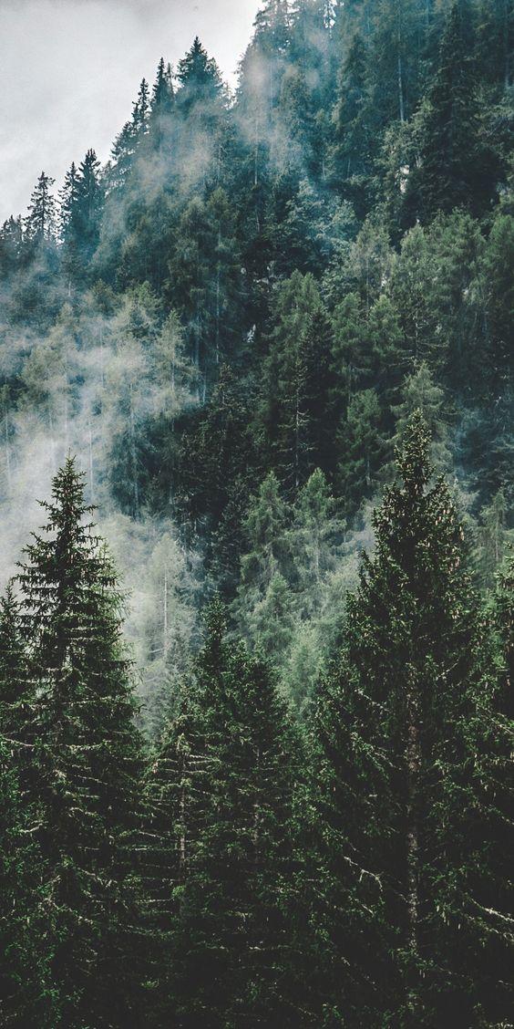 ağaç desenli duvar kağıtları