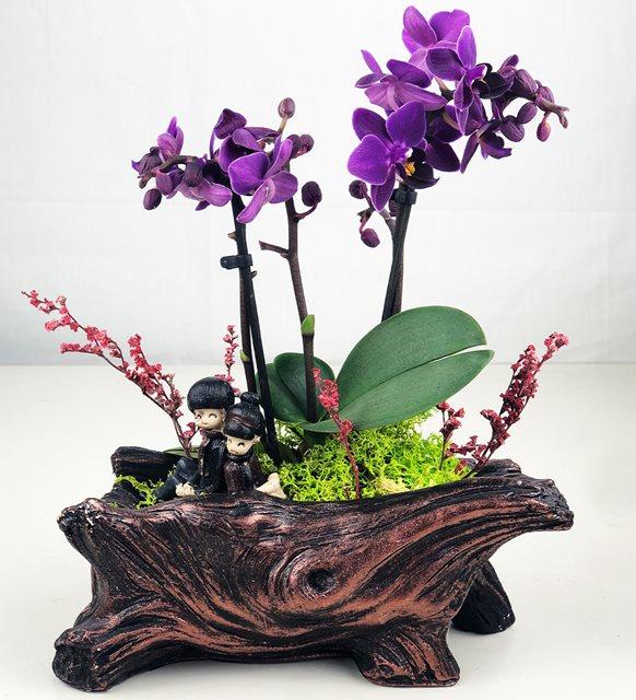 Eşe Anneler Günü hediyesi - orkide