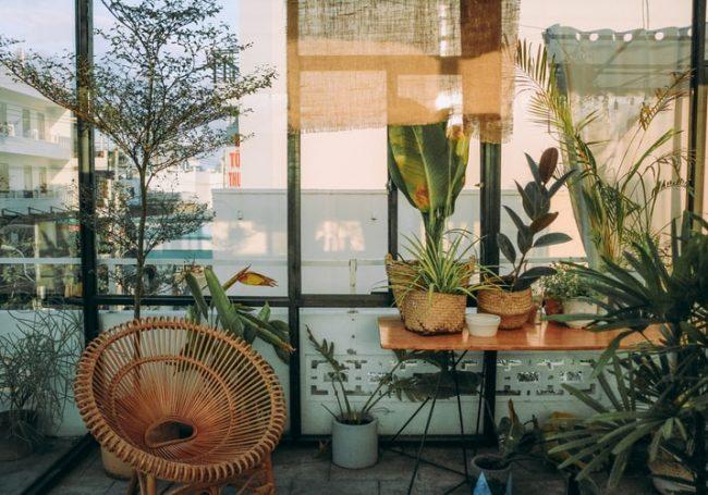 Bitkinin Bulunduğu Ortamın Isısı Oldukça Önemlidir