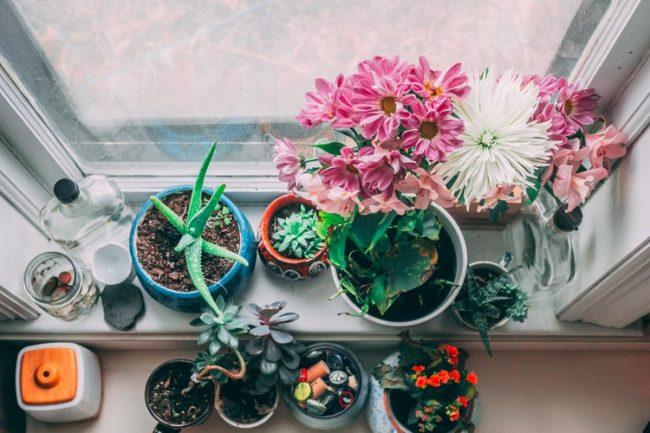 Evde Bitki Bulundurmanın Faydaları