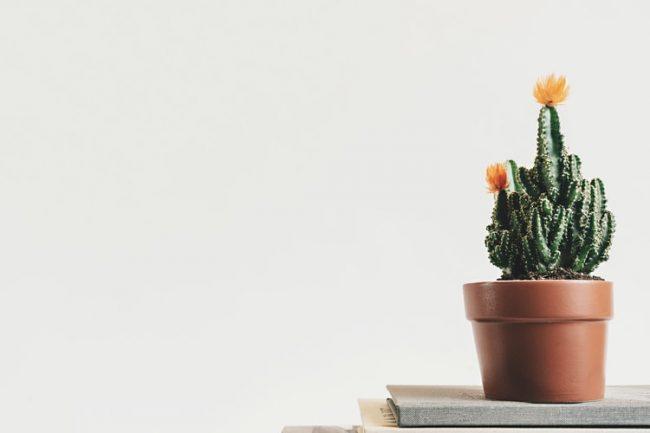 Saksı ve Toprak Değişimi Yaparak Bitkinizin Büyümesine Yardımcı Olun