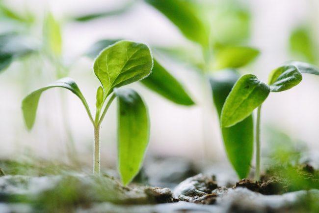 Evde Tohum Yetiştirmek