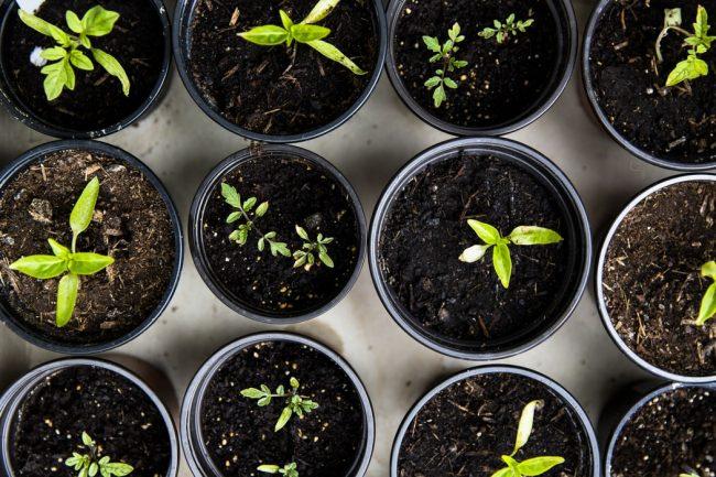 Tohum Yetiştirmenin Püf Noktaları