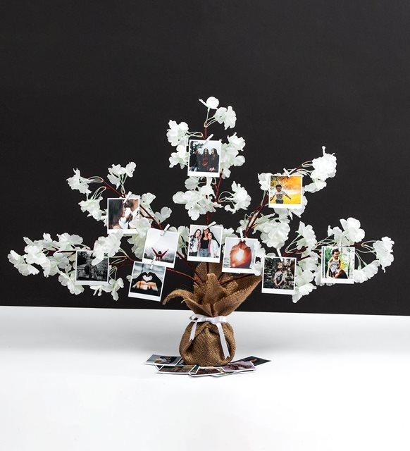 Beyaz bahar dalı fotoğraf ağacı