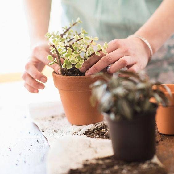 Sonbaharda bitki bakımı toprak değişimi
