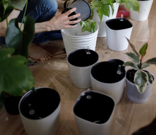 Sonbaharda bitki bakımı saksı temizliği