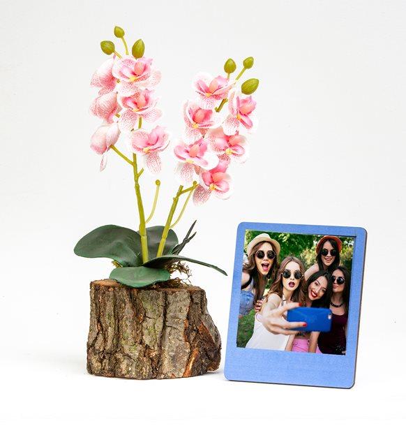 Çerçeveli orkide