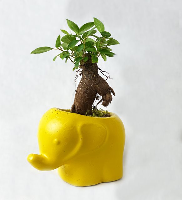 2021 yılının renkleri sarı fil saksı