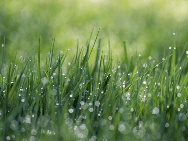Çim nasıl ekilir? Dikkat edilmesi gerekenler