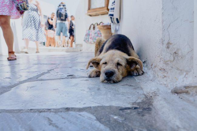Dünya sokak hayvanları günü veteriner yerleri
