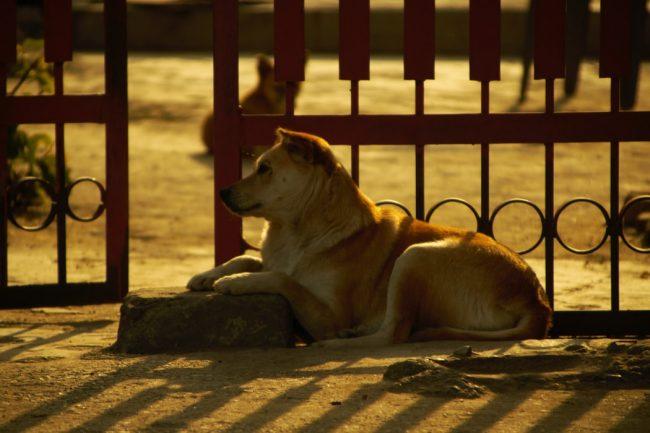 Dünya sokak hayvanları günü ilgi ve sevgi