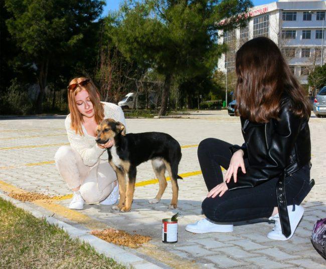 Dünya sokak hayvanları günü mama noktaları oluşturma