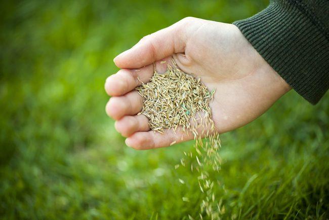 Çim nasıl ekilir?